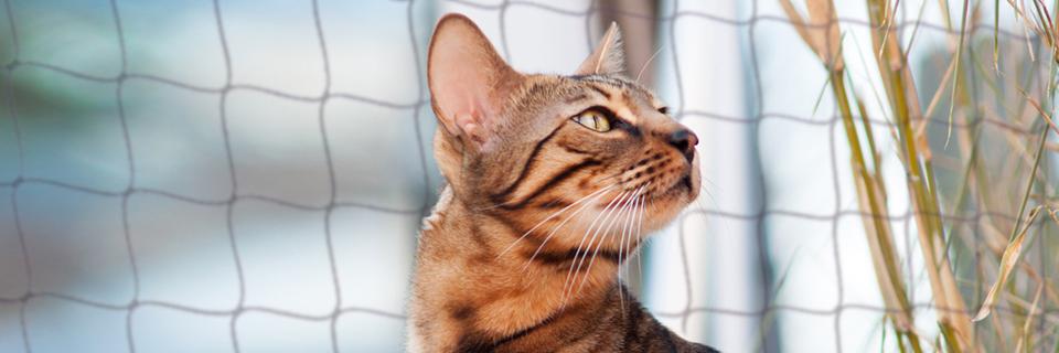 Katzen Netz Installation